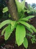 Schöne Blätter Stockbild