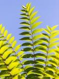 Schöne Blätter auf dem Baum Stockbilder