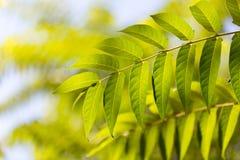 Schöne Blätter auf dem Baum Lizenzfreie Stockbilder