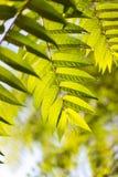 Schöne Blätter auf dem Baum Lizenzfreie Stockfotografie