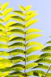 Schöne Blätter auf dem Baum Stockfotos