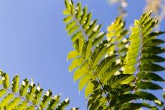 Schöne Blätter auf dem Baum Lizenzfreies Stockfoto