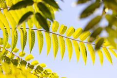 Schöne Blätter auf dem Baum Stockfotografie