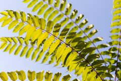 Schöne Blätter auf dem Baum Lizenzfreies Stockbild