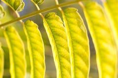 Schöne Blätter auf dem Baum Stockbild