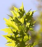 Schöne Blätter auf dem Baum in der Natur Stockfoto