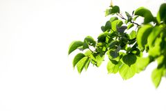 Schöne Blätter eines Baums in der Natur Lizenzfreie Stockfotos