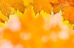 Schöne Blätter im Herbst Lizenzfreies Stockbild
