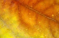 Schöne Blätter im Herbst Stockbild