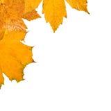 Schöne Blätter im Herbst Stockfotografie