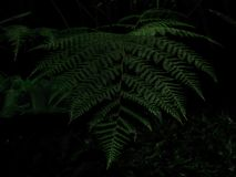 Schöne Blätter kommen von den tropischen Waldflächen stockfotos