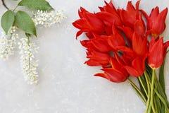 Schöne blühende Apfelbaumaste und rote Tulpe blüht auf einem grauen Hintergrund Stockfoto