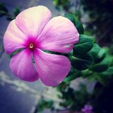 Schöne blühende Blume Stockfotografie
