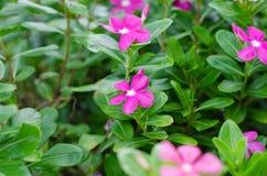 Schöne blühende Blumen Stockfotografie