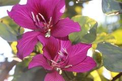 Schöne blühende Blumen im Park Stockfotos