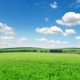Schöne blühende Felder Stockfotos