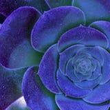 Schöne blühende große Blume der blau-purpurroten Farbe lizenzfreie stockbilder