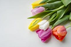 Schöne blühende Tulpenblume Blumenauslegung? Hintergrund, Hintergrund, Auslegung der Abbildung Feld des grünen Grases gegen einen Lizenzfreie Stockfotos