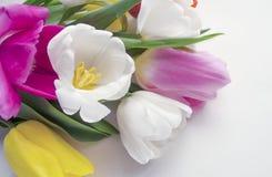 Schöne blühende Tulpenblume Blumenauslegung? Hintergrund, Hintergrund, Auslegung der Abbildung Feld des grünen Grases gegen einen Lizenzfreies Stockbild