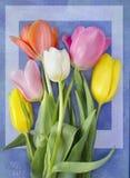 Schöne blühende Tulpenblume Blumenauslegung? Hintergrund, Hintergrund, Auslegung der Abbildung Feld des grünen Grases gegen einen Stockfoto