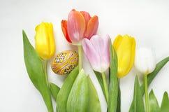 Schöne blühende Tulpenblume und bunte Eier Ostern Blumenauslegung? Hintergrund, Hintergrund, Auslegung der Abbildung Feld des grü Stockbilder