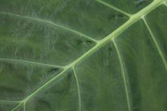 schöne Blattbeschaffenheit oder -hintergrund lizenzfreies stockbild
