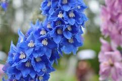 Schöne blaue Blume Stockfotografie