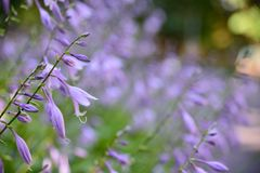 Schöne blaue Blume mit bokeh lizenzfreies stockbild