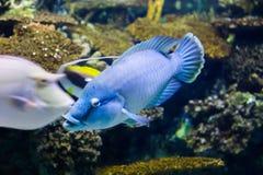 Schöne blaue Fische stockfotos