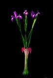 Schöne Blendenblumen im Vase Lizenzfreie Stockbilder