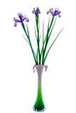 Schöne Blendenblumen im Vase Lizenzfreies Stockfoto