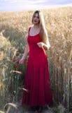 Schöne blonde Frau auf einem Weizengebiet bei Sonnenuntergang Stockfotos