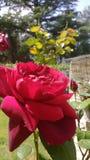 Schöne Blume Lizenzfreie Stockbilder