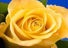 Schöne Blume Stockbilder