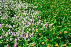 Schöne Blume Stockbild