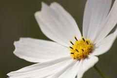 Schöne Blume Stockfotografie