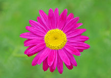 Schöne Blume Lizenzfreies Stockbild