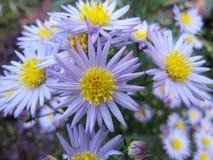 Schöne Blume lizenzfreie stockfotografie