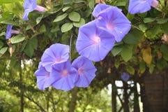 Schöne Blume Stockfoto