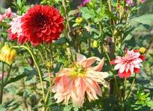 Schöne Blume Lizenzfreie Stockfotos