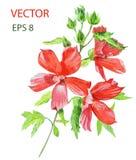 Schöne Blume Adobe Photoshop für Korrekturen Stockbild