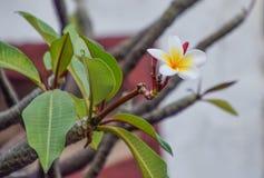 Schöne Blume auf Baum lizenzfreie stockfotos
