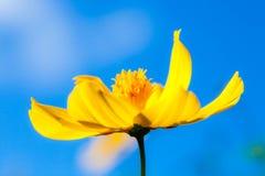 Schöne Blume auf dem Gebiet und blauem Himmel, Makro Lizenzfreie Stockbilder