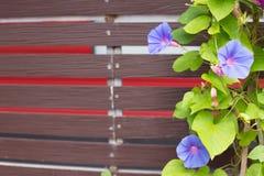 Schöne Blume auf hölzernem Brett Lizenzfreies Stockbild