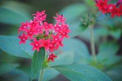 Schöne Blume in der Blüte Lizenzfreies Stockbild