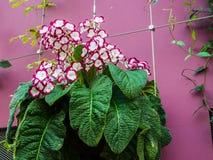 Schöne Blume in der Blumen-Haube, Singapur Lizenzfreies Stockbild