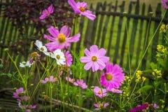 Schöne Blume der Frühlings-Saison Stockfotografie