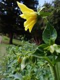 Schöne Blume in der gelben Farbe stockbilder