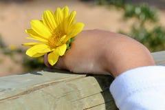 Schöne Blume in der Hand Lizenzfreies Stockfoto