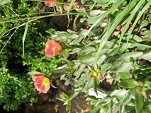 Schöne Blume in einem Topf Lizenzfreie Stockbilder